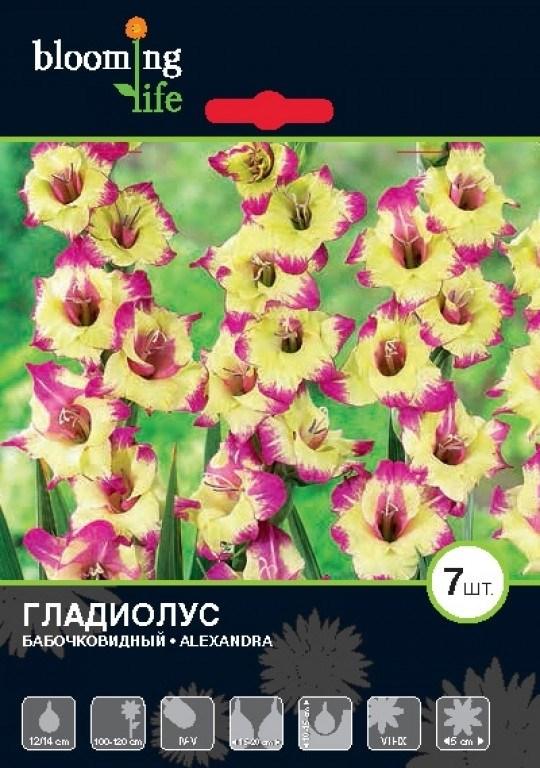 Гладиолус Крупноцветковый Александра (7шт) - фото 42750