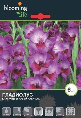 Гладиолус Крупноцветковый Алфалфа (7шт) - фото 42751