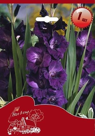 Гладиолус Крупноцветковый Блю Берд (7шт) - фото 42757