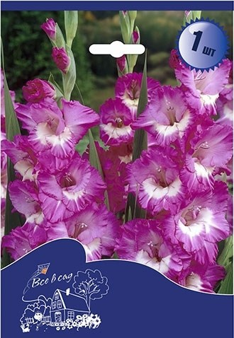 Гладиолус Крупноцветковый Валенсия (7шт) - фото 42760