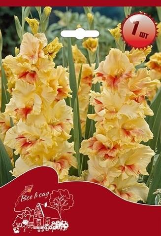 Гладиолус Крупноцветковый Джестер (7шт) - фото 42770