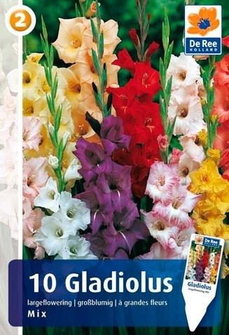 Гладиолус Крупноцветковый микс (7шт) - фото 42782