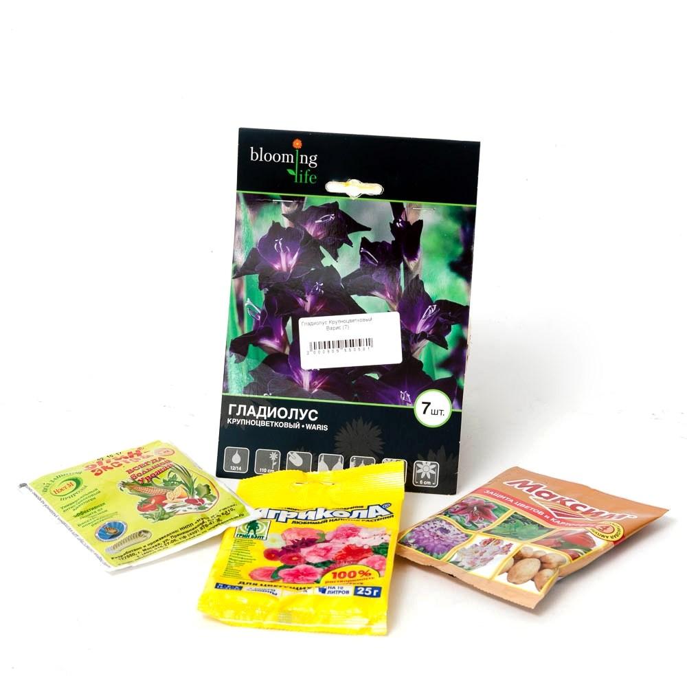 Гладиолус луковичные цветы