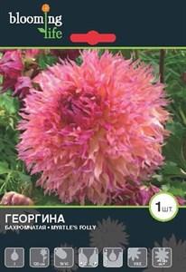 Георгина Бахромчатая Миртис Фолли (1шт)