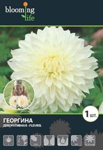 Георгина Декоративная Флюрел (1шт)