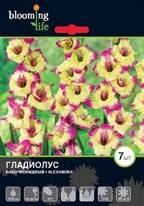Гладиолус Крупноцветковый Александра (7шт)