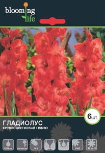 Гладиолус Крупноцветковый Бимбо (7шт)