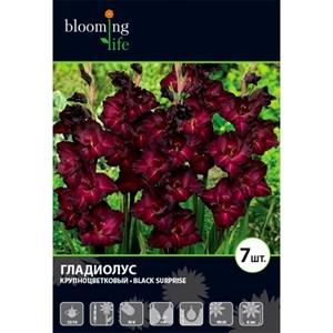 Гладиолус Крупноцветковый Блэк Сюрпрайз (7шт)