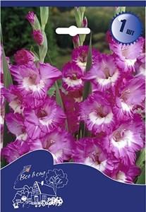 Гладиолус Крупноцветковый Валенсия (7шт)