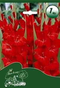Гладиолус Крупноцветковый Виг Сенсейшн (7шт)
