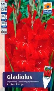 Гладиолус Крупноцветковый Виктор Борге (7шт)