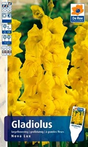 Гладиолус Крупноцветковый Нова Люкс (7шт)