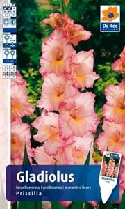 Гладиолус Крупноцветковый Присцилла (7шт)