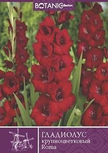 Гладиолус Крупноцветковый Рома (10шт)