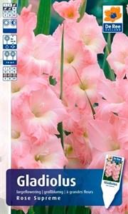 Гладиолус Крупноцветковый Роуз Суприм (7шт)