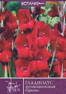 Гладиолус Крупноцветковый Эспрессо (10шт)