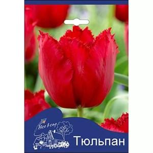 Тюльпан Кристал Бьюти (3шт)
