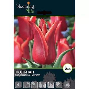 Тюльпан Лилистар (7шт)