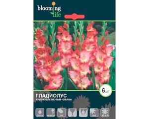 Гладиолус Крупноцветковый Драма(7)