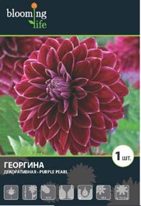 Георгина Декоративная Перпл Перл