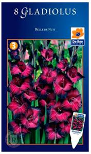 Гладиолус Крупноцветковый Бель Де Нуи (8)