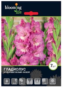 Гладиолус Крупноцветковый Роберт (7)