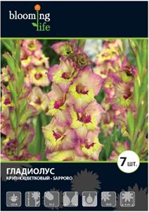 Гладиолус Крупноцветковый Саппоро (7)